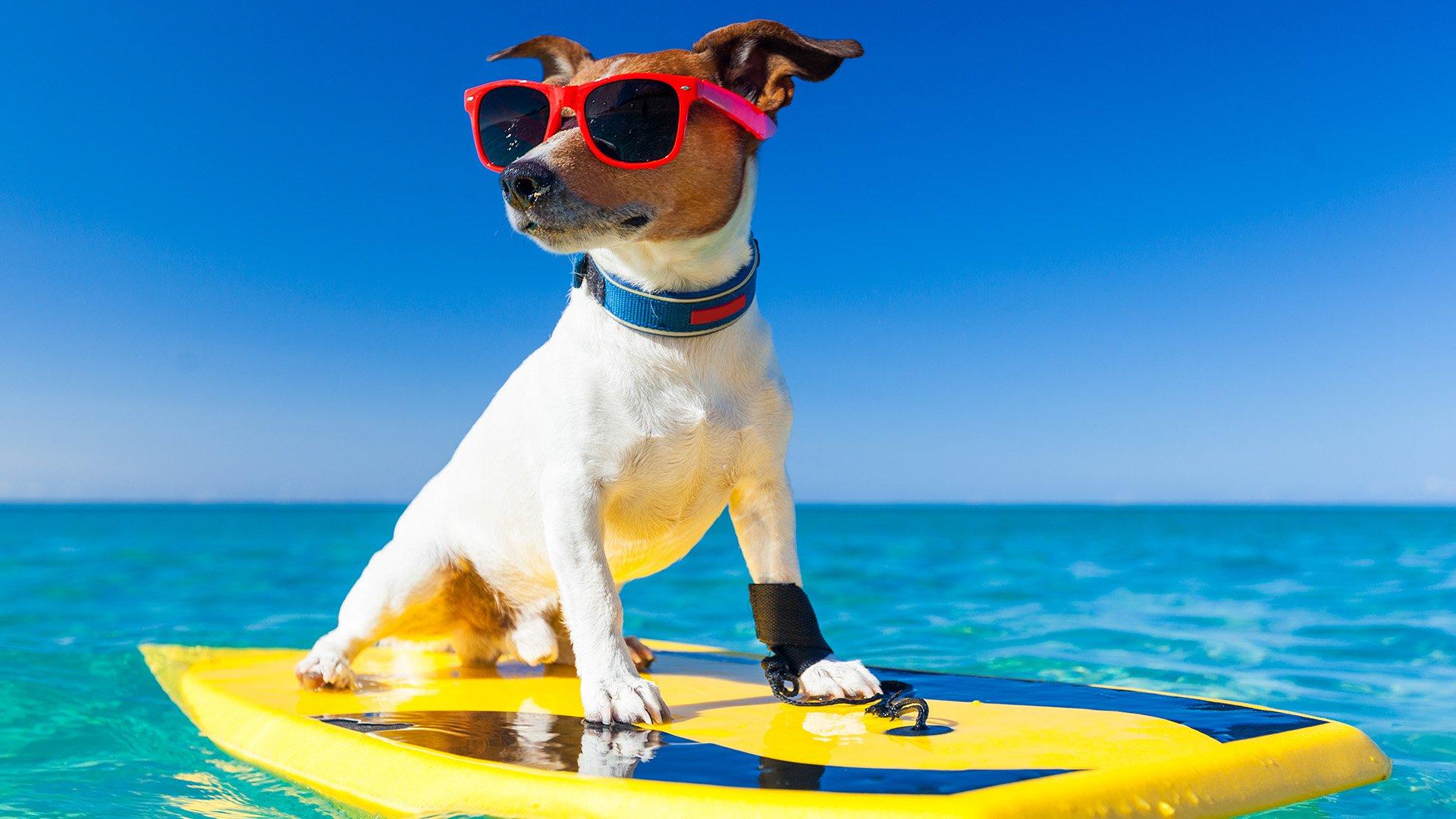 El Quisquilloso - Edición Junio 2025 Vacaciones-de-las-vacaciones